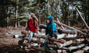 children climbing on logs in the woods